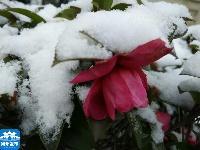 最新航拍大片 直播扬州雪景