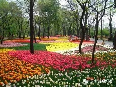 我市申办2021年世界园艺博览会