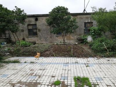 仪征一居民铲草坪、填池塘破坏绿化改菜地!相关部门回应……