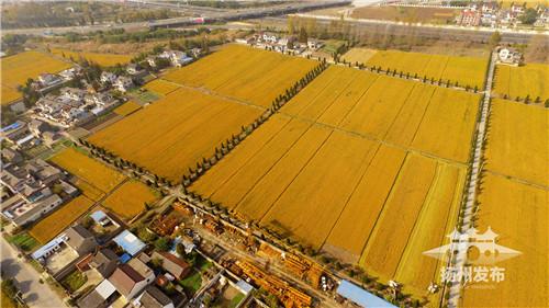 """【乡村振兴】卖粮搭上互联网,种地用起无人机!扬州""""职业农民""""已达数万"""