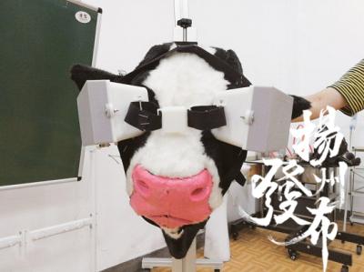 【新时代 我奋斗我幸福】脑洞大开!奶牛戴上智能VR眼镜,调节情绪助产奶