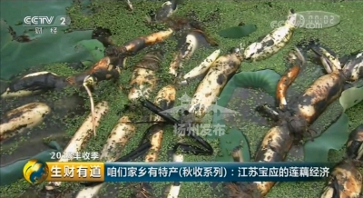 厉害了!央视再次聚焦扬州,这座县城缘何引关注?