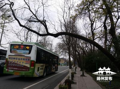 """盐阜东路上有一棵""""凹造型"""" 的行道树,很多人看到却忧心忡忡"""