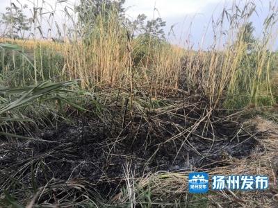 【扬州发布视频】下午,扬州西区一片芦苇田突然起火,一妇女在火中呼救......