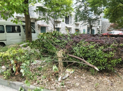 【马上办】新世纪花苑小区环境脏乱差  物业回应