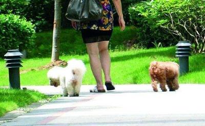 宠物狗不拴绳,法院判赔20万元!广东这起案例值得养狗人警醒