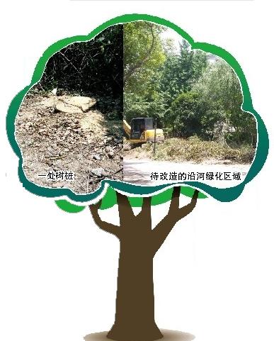 【马上办】崇文苑多棵大树突然被锯 规划也未公示 这是为何?