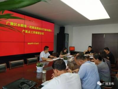 广陵区召开水稻第一次病虫防治工作及当前水稻生产重点工作部署会议