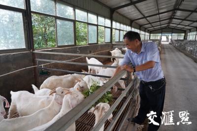 """【爱国情 奋斗者】拄拐奋斗的""""科技羊倌"""":用毕生精力服务农民"""
