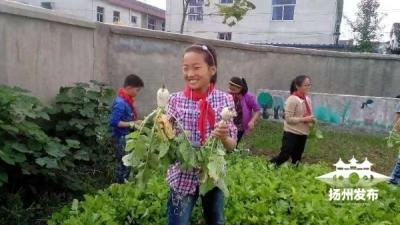 什么情況?揚州這個學校的學生都在忙種地……