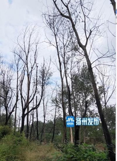 【马上办】国道边杨树被火烧后枯死    谁来管?