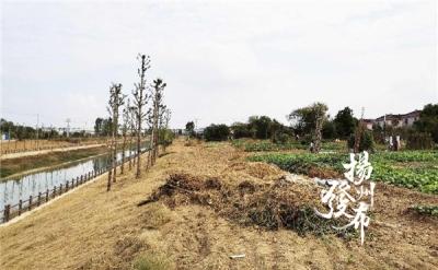 """【晚报调查】挖河堤、拔绿化……""""硬核""""大妈疯狂种菜,水清岸绿咋保护?"""