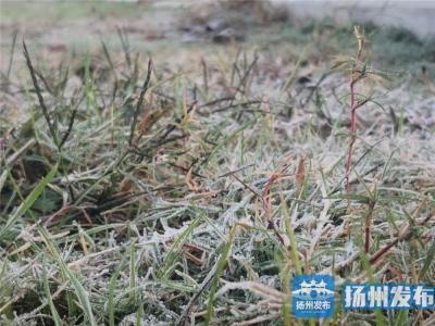 【揚州發布視頻】潔白霜花成風景
