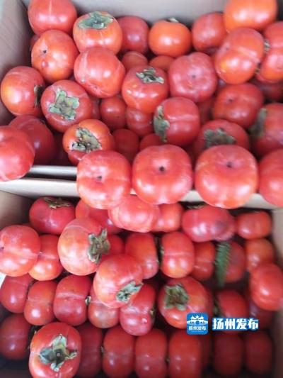 【扬州中草药故事】扬州人爱吃的柿子,浑身都是宝!你知道吗?