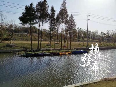 """小区、路边菜田""""弱爆了"""",扬州这条河里居然有人围坝种菜"""