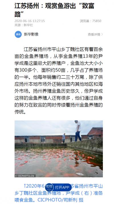 """新華社聚焦揚州:觀賞魚游出""""致富路"""""""
