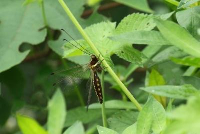 【自然之家】仔细看~ 这种昆虫,你见过吗?