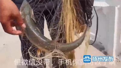 【视频】还敢在万福闸撒网捕鱼?这一幕被游客拍到了,还发到了网上......