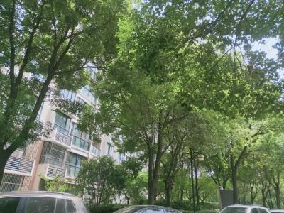 【马上办】这里:绿化树遮光待修,地下车库堆杂物要清