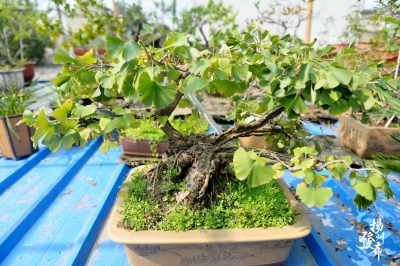 【图集】屋顶生态园见过没?各种迷你花木……
