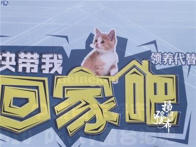 今天是扬州小动物领养日,快带它们回家吧!