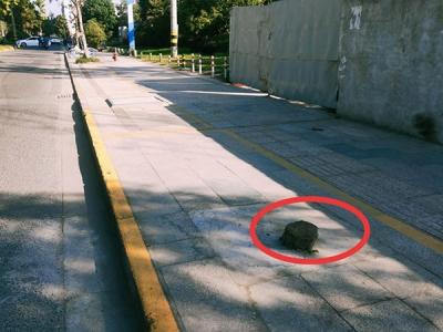 """【马上办】江都路上的这截树桩成了""""绊脚石""""  ,市民盼清理"""