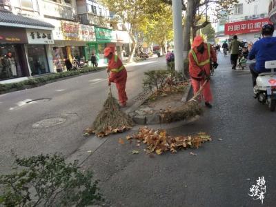 【小布话题】又到了落叶美景季,落叶缓扫可行吗?
