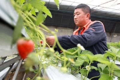 """留在扬州过大年!这100余名外地人齐发声:""""春节不回去了,不给社会添乱!"""""""
