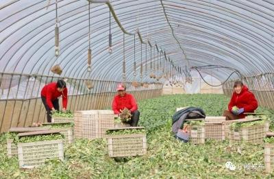 """承包土地种植蔬果、创办农业公司——沙头镇孙辉:""""乡愁让我深爱着农业"""""""