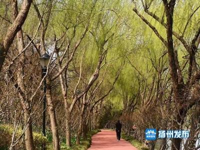 【视频】春日扬城,垂柳碧绿堤岸新