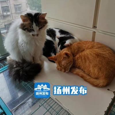 """【马上办】这位""""猫爸爸""""坚持10年救助流浪猫,现在需要你的帮助……"""