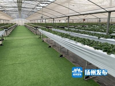 """宝应5家休闲农业主体入选省""""一园两基地""""推介名单"""